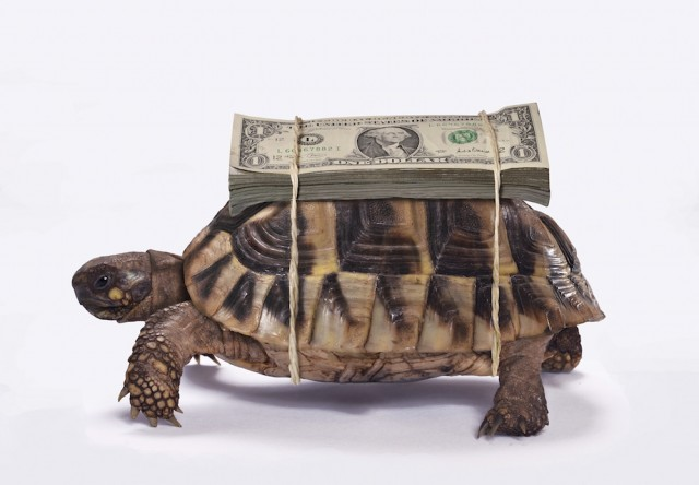AdobeStock_turtlemoney