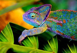 Embrace living like a chameleon