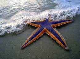 Blog Pick of the Week:  Make a difference to a starfish
