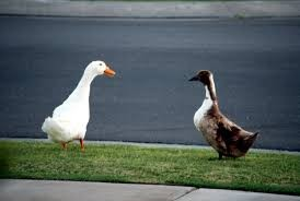 What's good for the goose… Why NIGP's ownership is not just a public sector issue