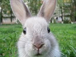Where Do You Stand on the Use of Rabbits in Strategic Sourcing?